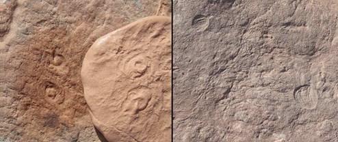 Zwei Wesen vom Anbeginn der Zeit nach Obama und Attenborough benannt
