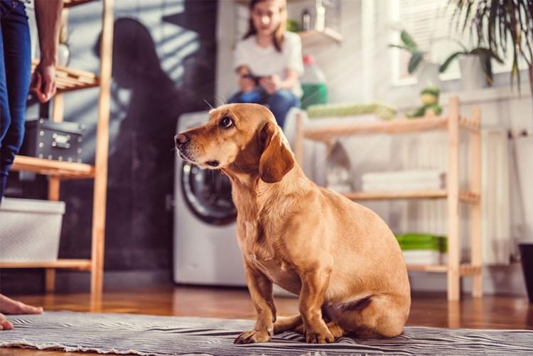 Mietwohnung Zu Haben Aber Bitte Ohne Kinder Und Hunde Mieten Derstandard De Wirtschaft