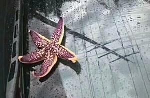 In ostchinesischer Stadt regnete es Meerestiere vom Himmel