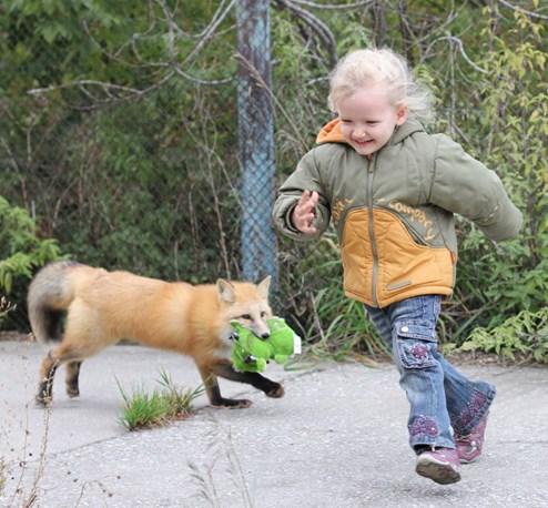 Fuchs Als Haustier Kaufen