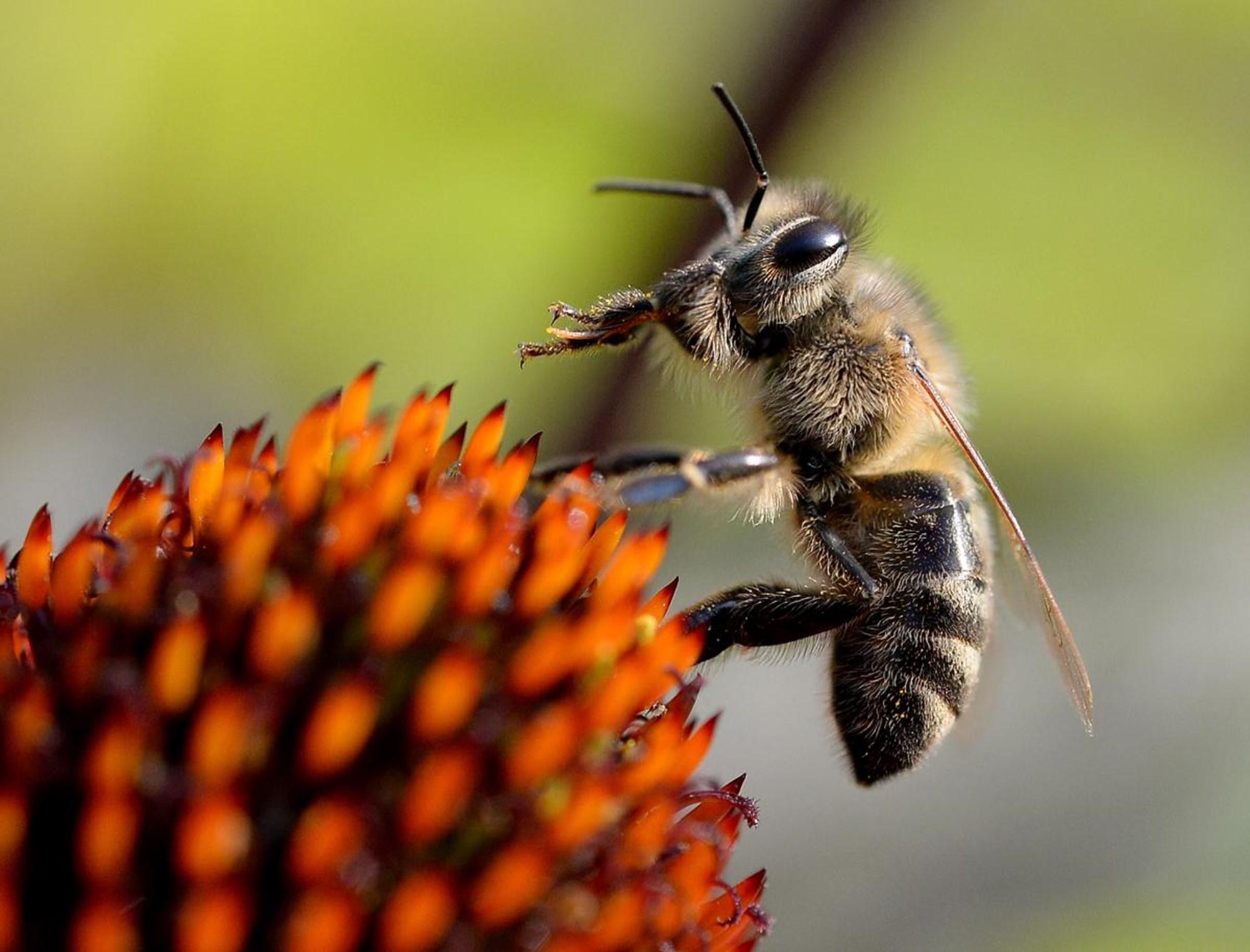 Droht biologische Kriegsführung mit Insekten?