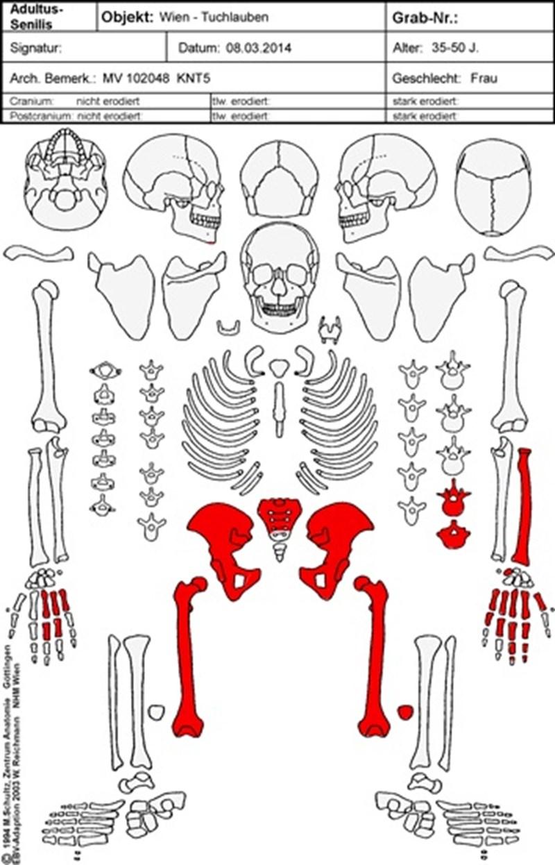 Skelettdatierung