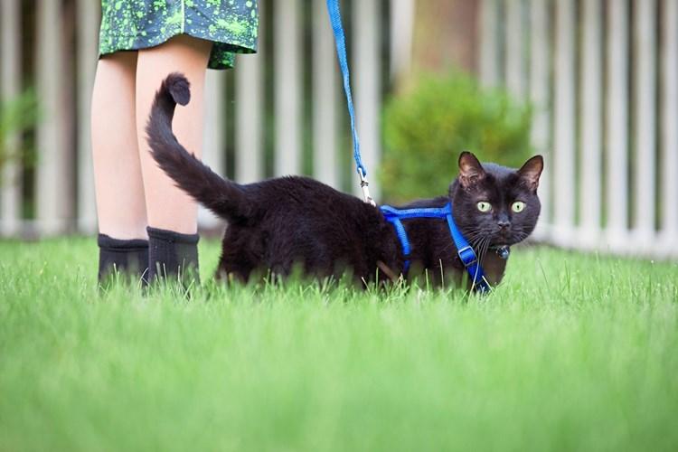 Pro & Kontra: Mit der Katze an der Leine spazieren gehen ...