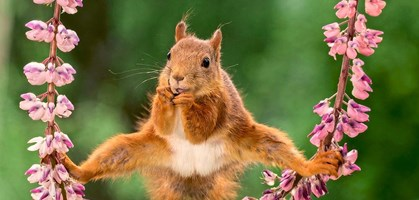 foto: comedy wildlife photography awards/geert weggen