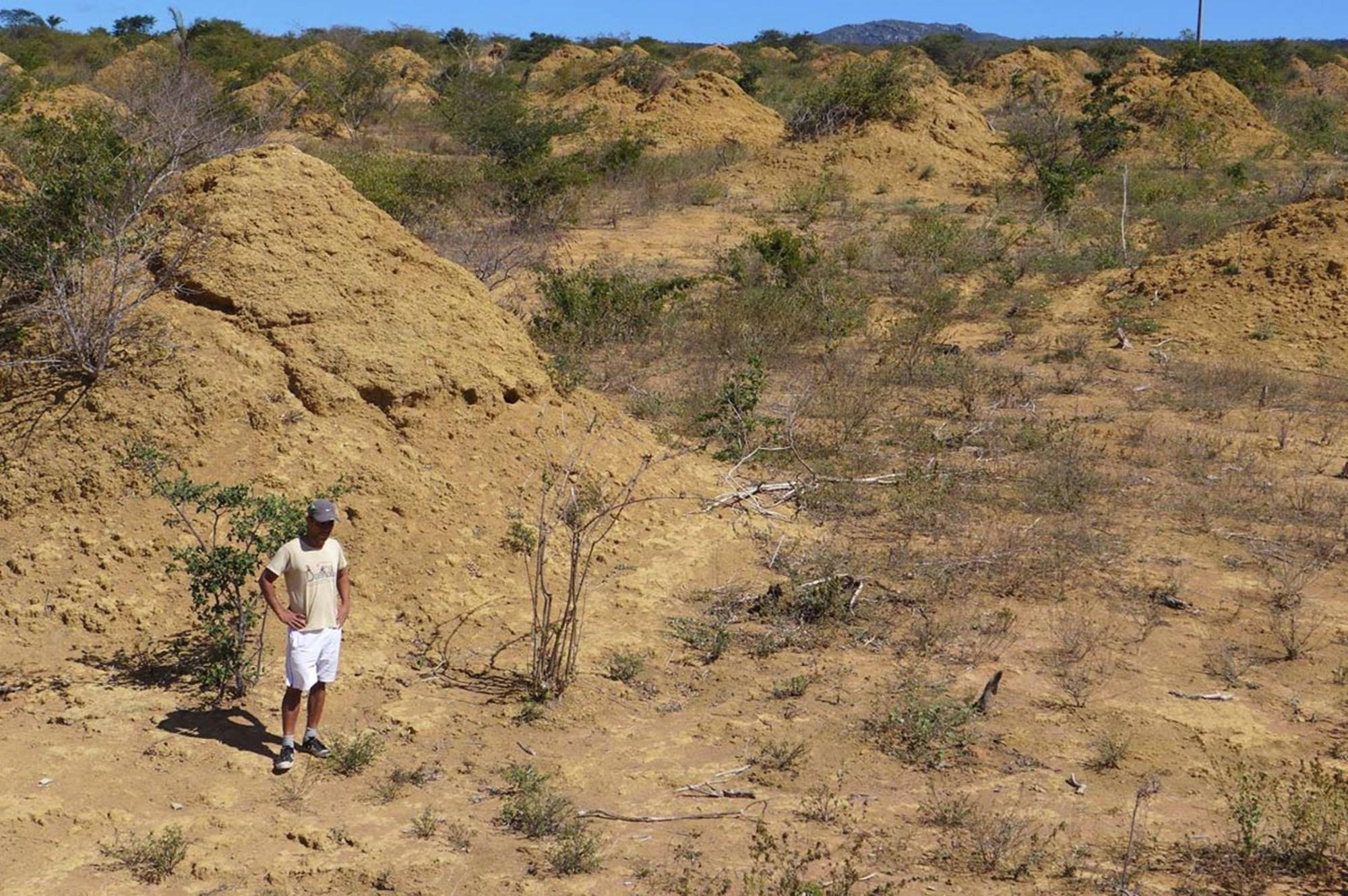 Monumentale Termitenhügel seit 4.000 Jahren in Betrieb
