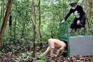 foto: apa/afp/borneo orangutan survival foundation