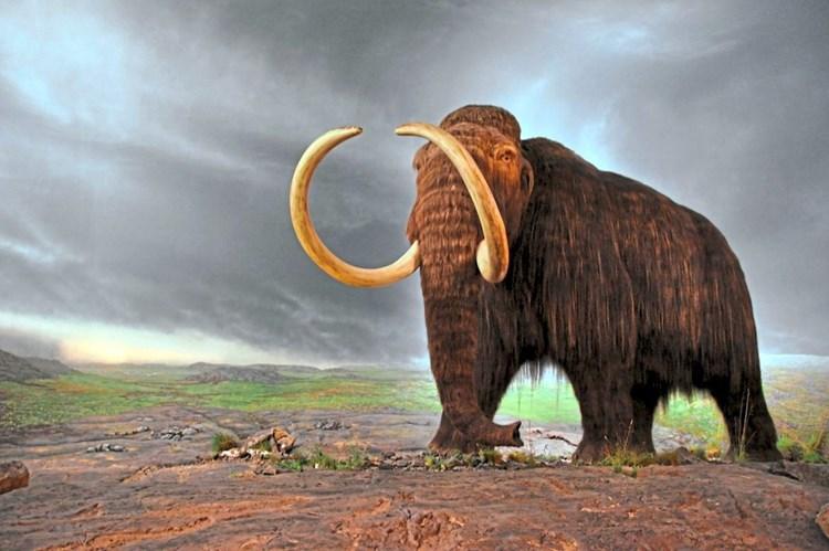 Mammut Dna