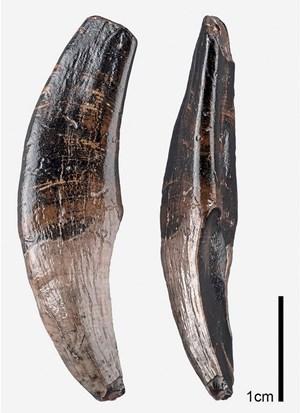 Verschiedene fossile Dating-Techniken