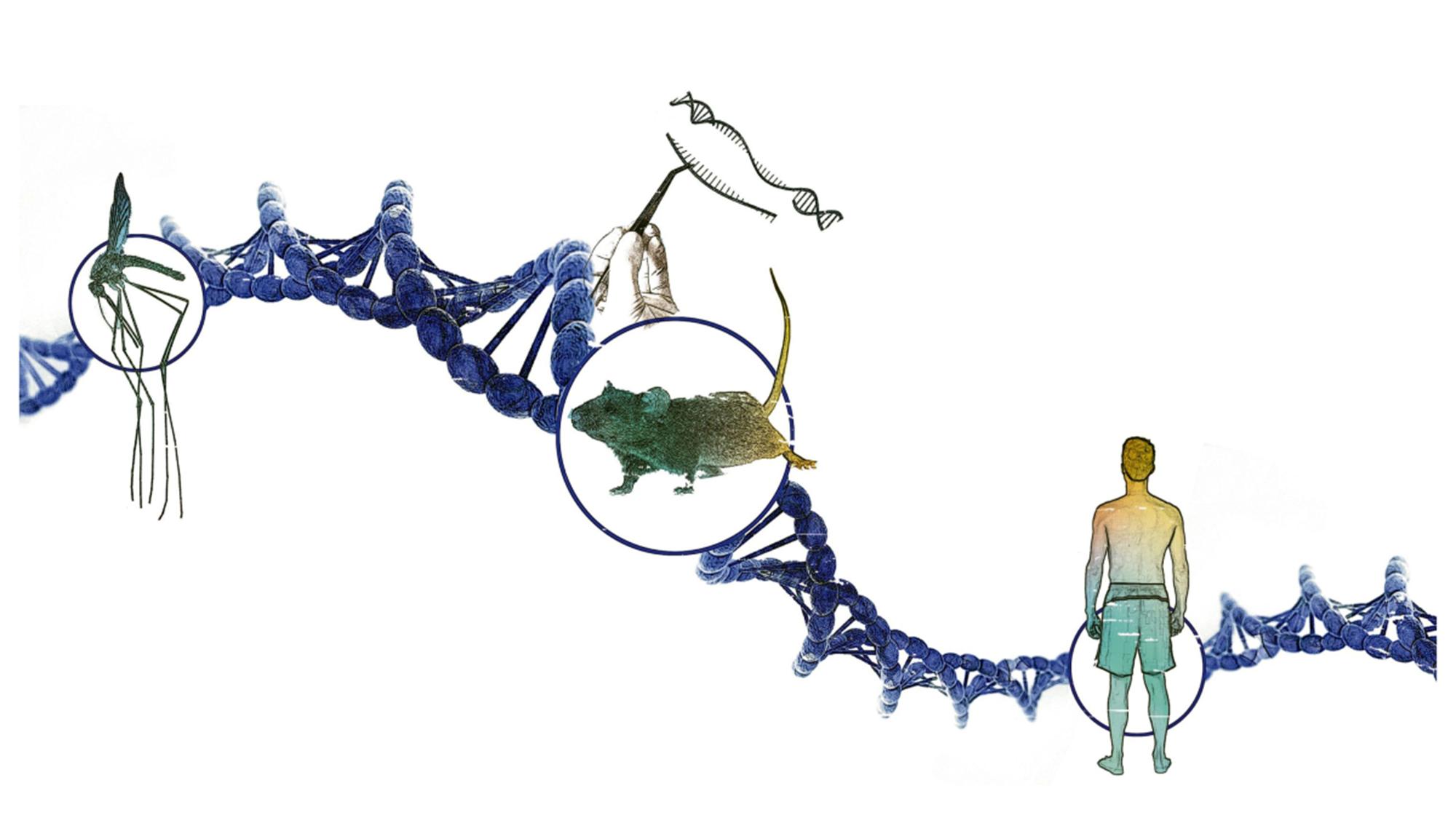 Wie sich die genetische Entwicklung ganzer Arten manipulieren lässt
