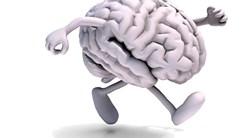 Veränderte Verbindungsmuster im Gehirn von Autisten entdeckt