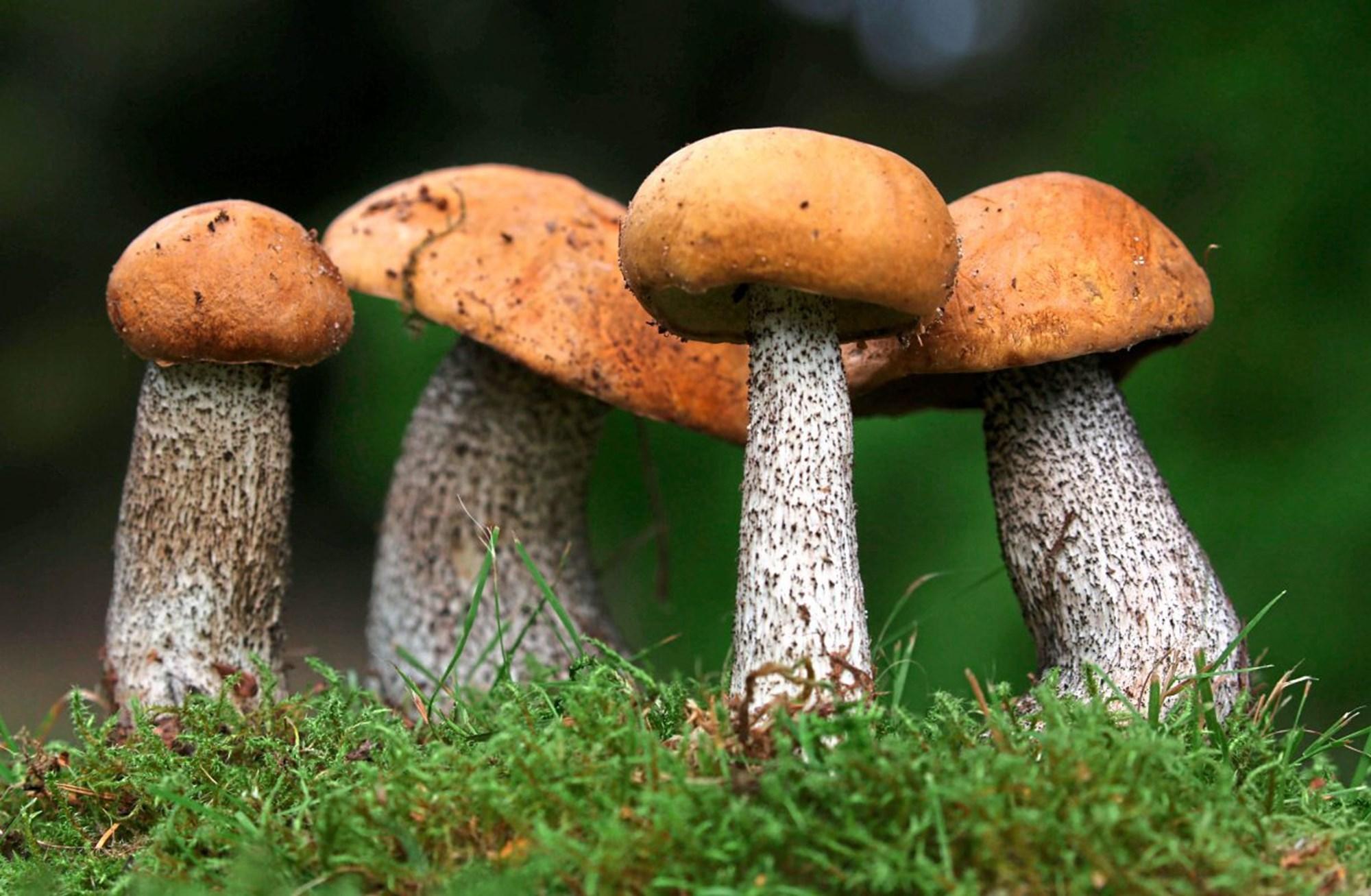 DNA enthüllt Pilz-Massenaussterben vor 145 Millionen Jahren – derStandard.at