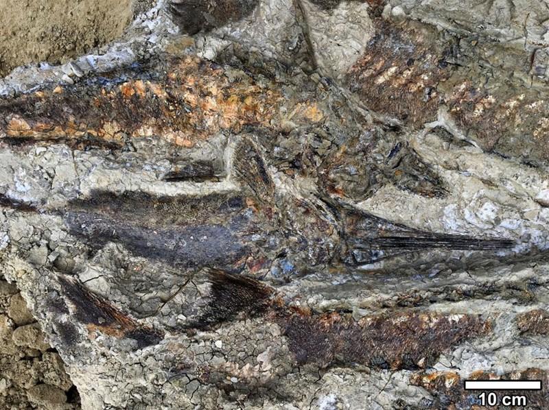 'Kho hóa thạch' kể lại diễn biến vụ thiên thạch rơi 66 triệu năm trước. Ảnh 1
