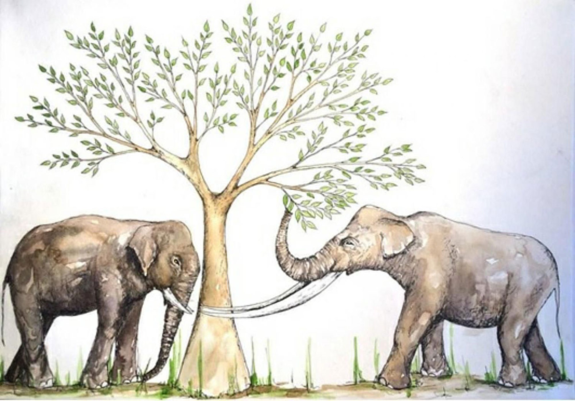 Wie der Asiatische Elefant seinen nahen Verwandten überdauern konnte – derStandard.at