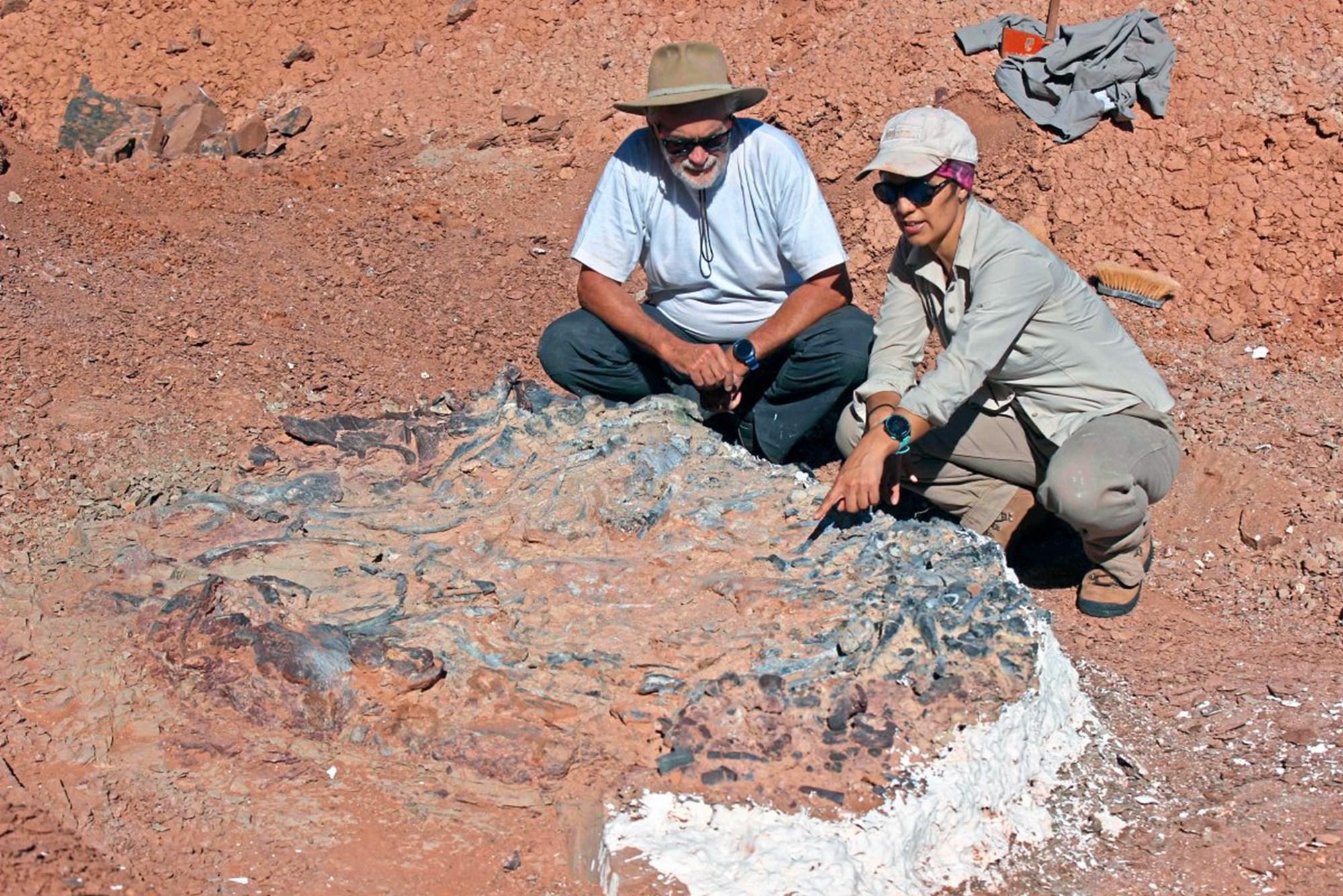 Argentinien: Üppiger Fossilienschatz aus der Trias entdeckt – derStandard.at