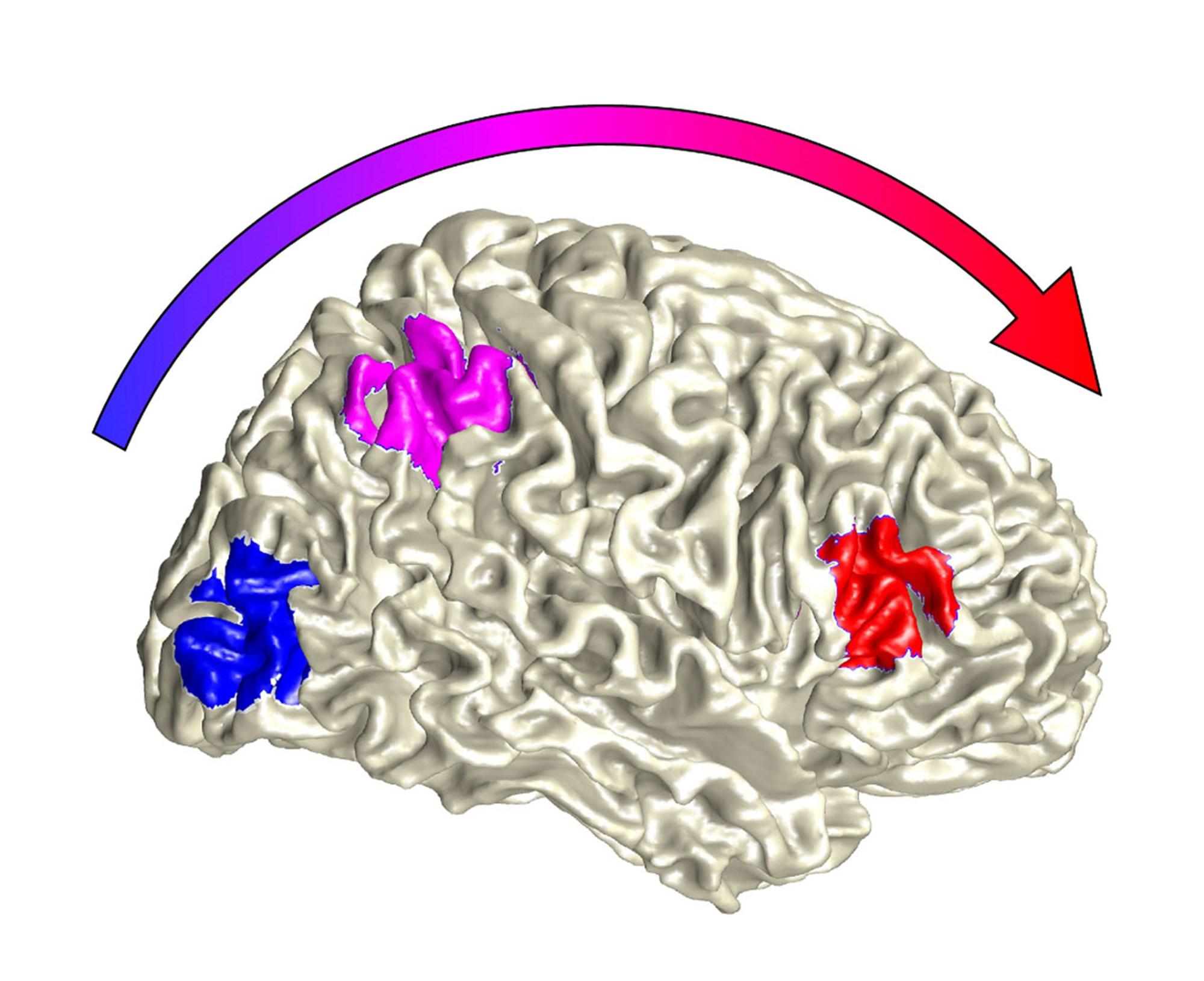 Unser Gehirn kombiniert Sinneseindrücke nur, wenn dies sinnvoll ist – derStandard.at