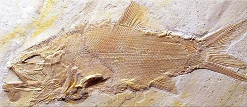Dating-Typen, die bis heute fossilen werden, sind
