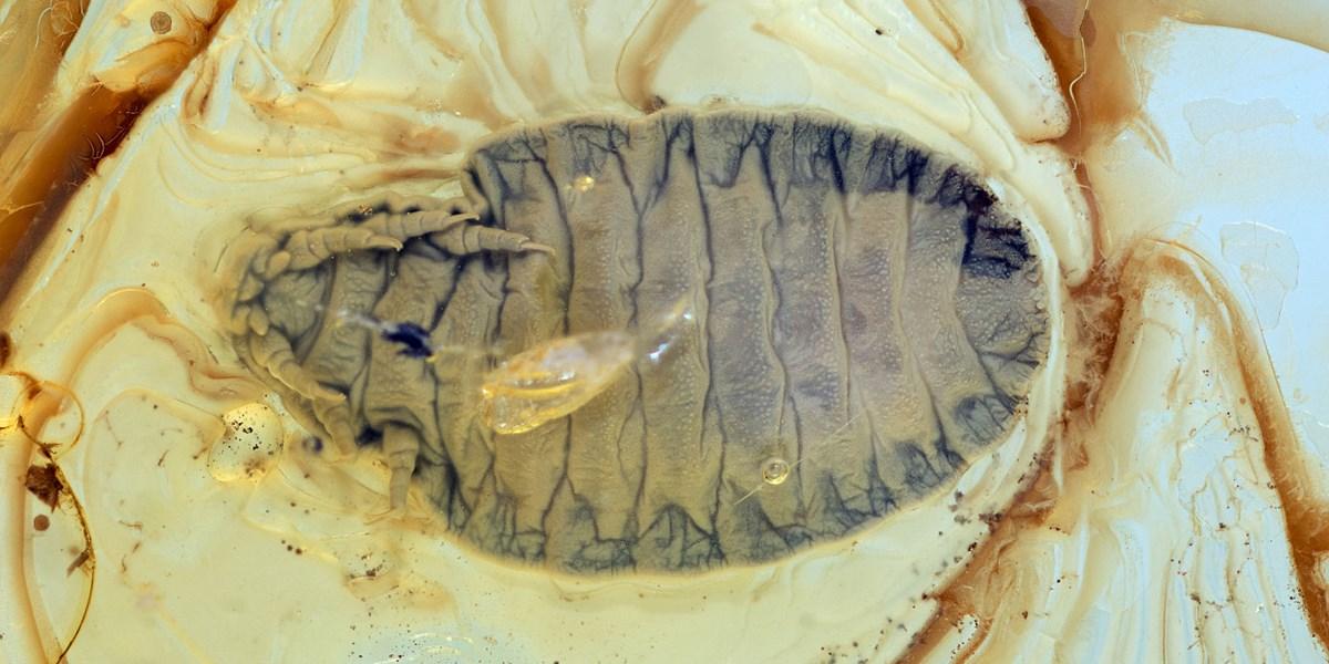 Dating-Technik mit dem Vergleich von Fossilien