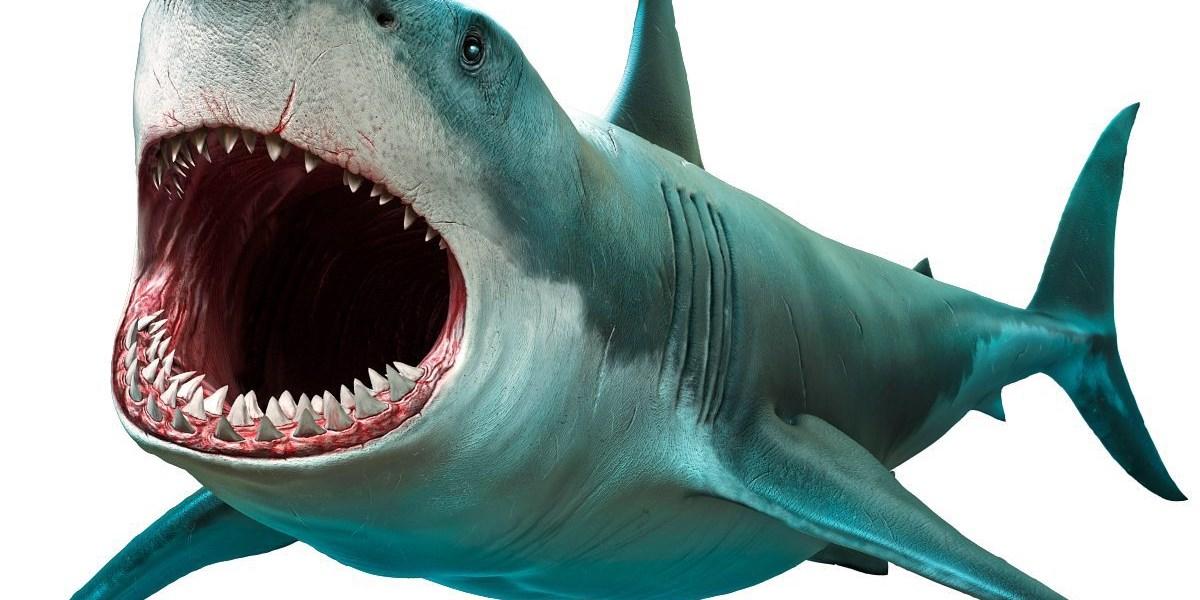 Haifisch Gebiss