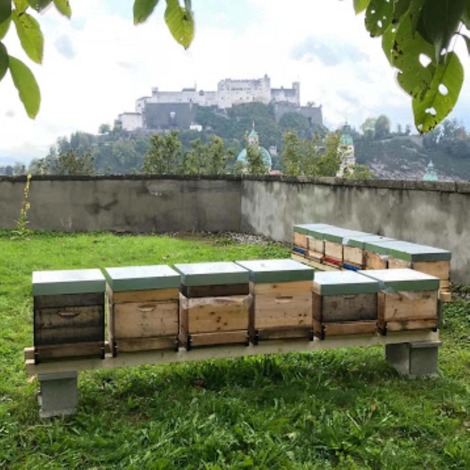 Salzburger Firmen haben Bienen lieb