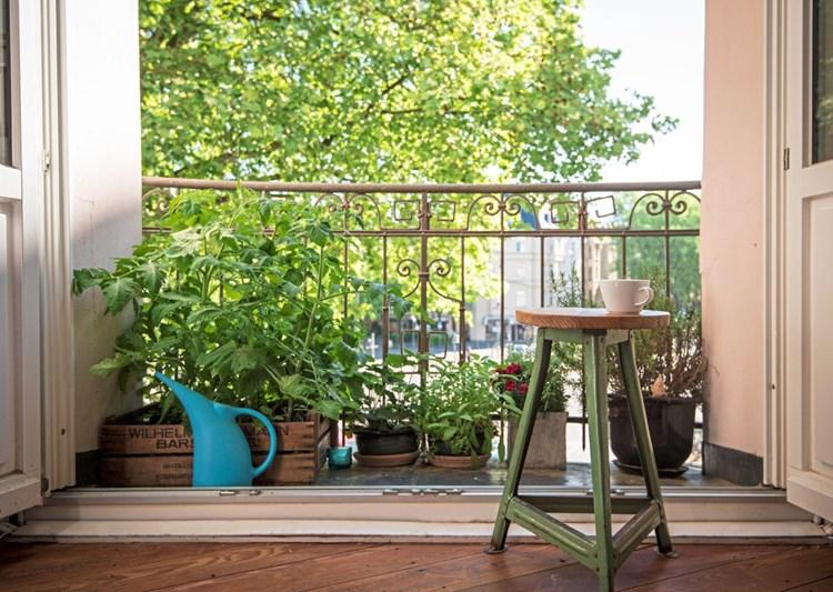 Pflanzen statt Sichtschutz: Mehr Kreativität auf den Balkonen