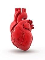 Behandlung für erbliche Herzmuskelerkrankung entdeckt