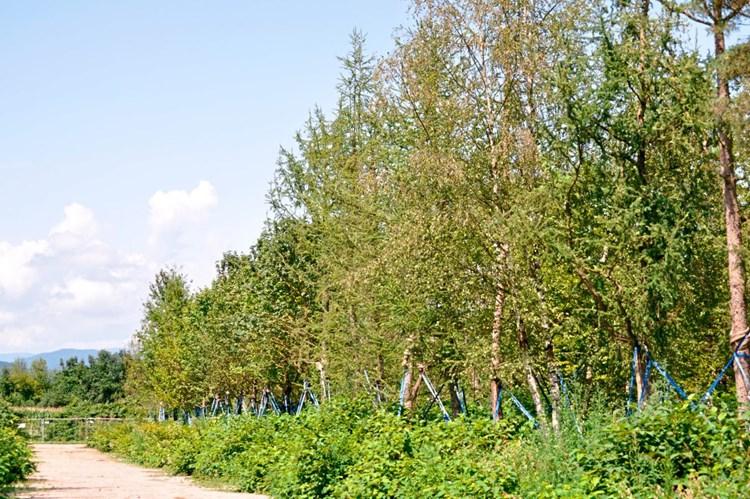 Im Worthersee Stadion Stehen Bald Fast 300 Baume