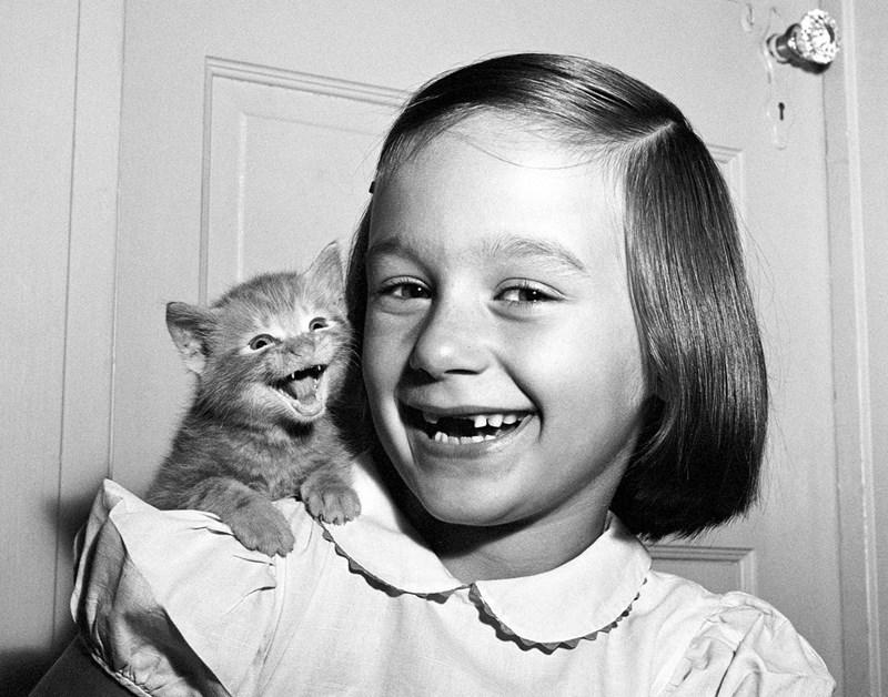 Wie man mit Katzenfotos Karriere macht