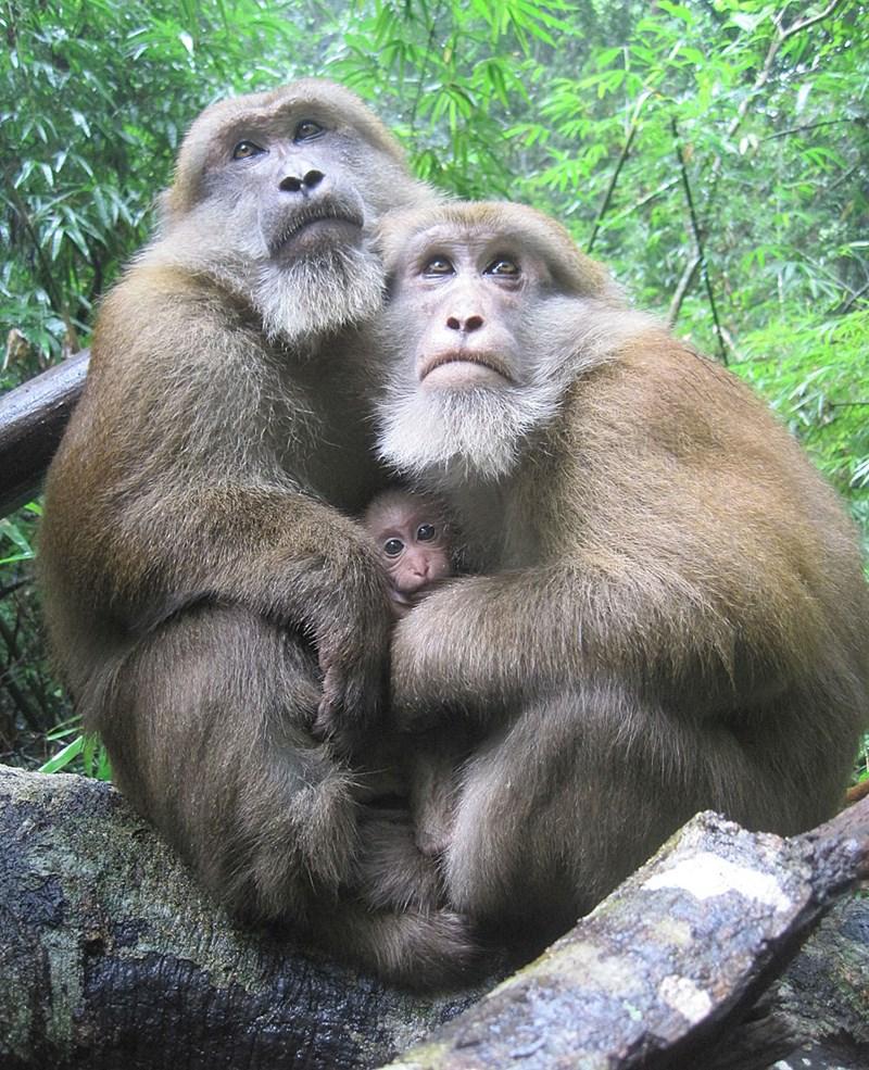 Was für eine Bromance unter Affen Voraussetzung ist