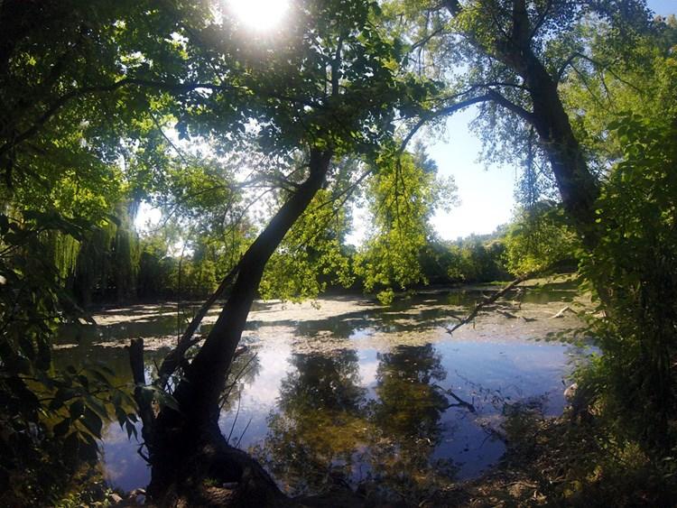 Laufen die Nackt durch Wälder Nackt durch