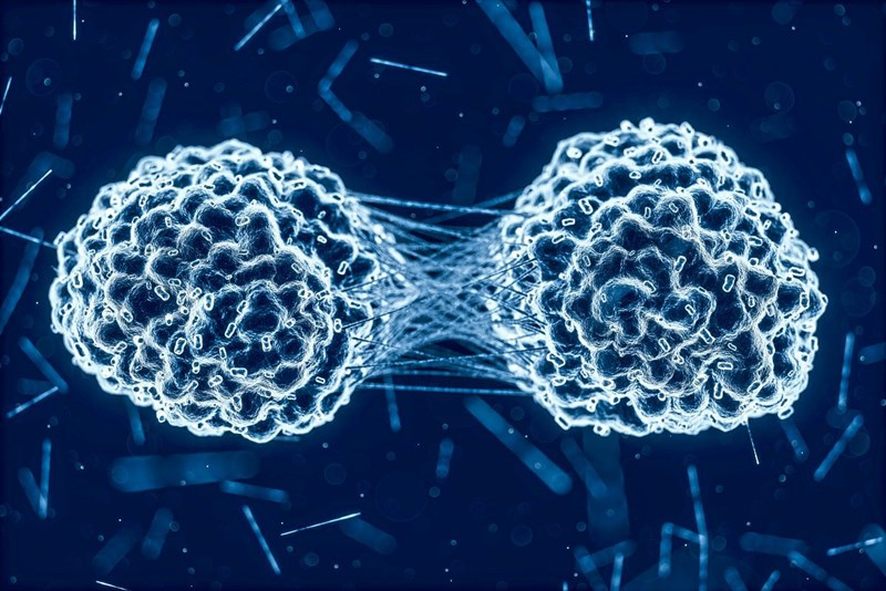 Neuer Hemmstoff gegen Krebs-Metastasen entdeckt