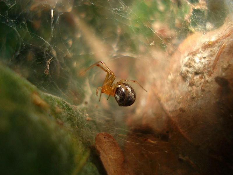 Hurrikans machen Spinne langfristig aggressiver