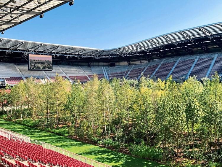 Im Wuchtelwald 299 Baume Bei For Forest Im Worthersee