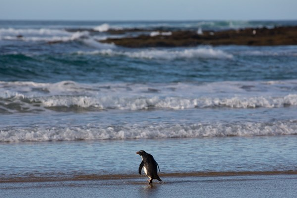 Foto: APA/AFP/Zoos Victoria and Phillip Island Nature Parks