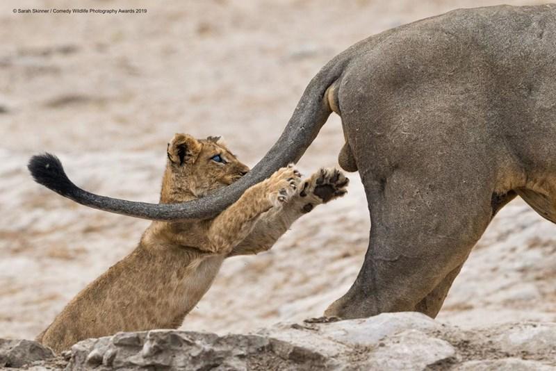 Tierische Sachen zum Lachen – für einen guten Zweck
