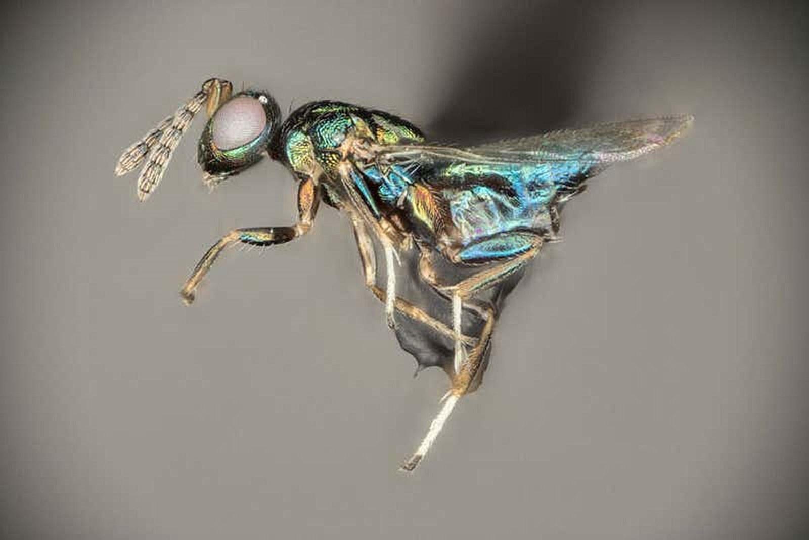 Wespe kontrolliert das Verhalten von gleich mehreren Spezies – derStandard.at