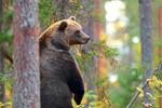 Karpaten: Revierkampf im größten Wald-Nationalpark Europas