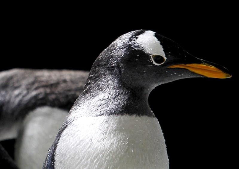 """""""sudo"""": Entwickler beheben gefährliche Linux-Lücke"""