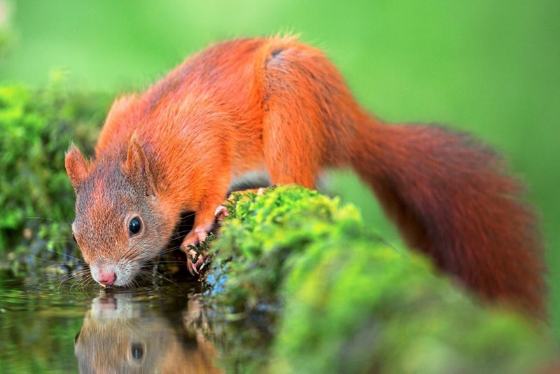 Aus dem Leben der Eichhörnchen