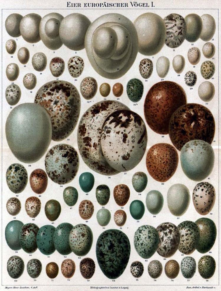 Farbe Der Eier