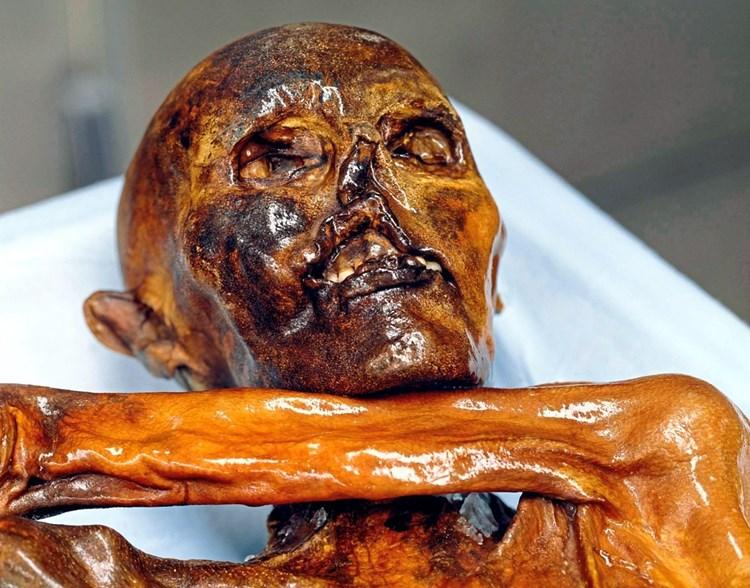 Alte Moose verraten neue Details über Ötzis letzte Reise
