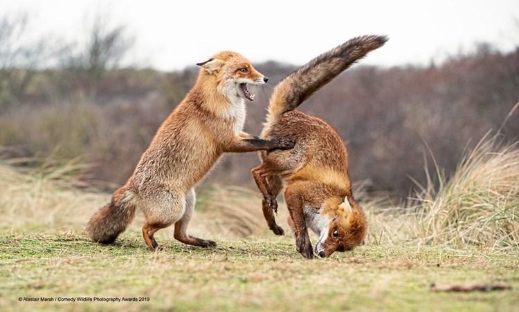 Das sind die weltweit lustigsten Tierfotos des Jahres