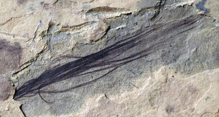 Dank Federn konnten Dinosaurier fast von Pol zu Pol leben