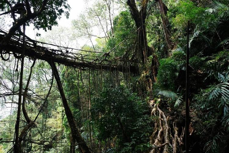 Die wundersamen lebenden Brücken von Meghalaya