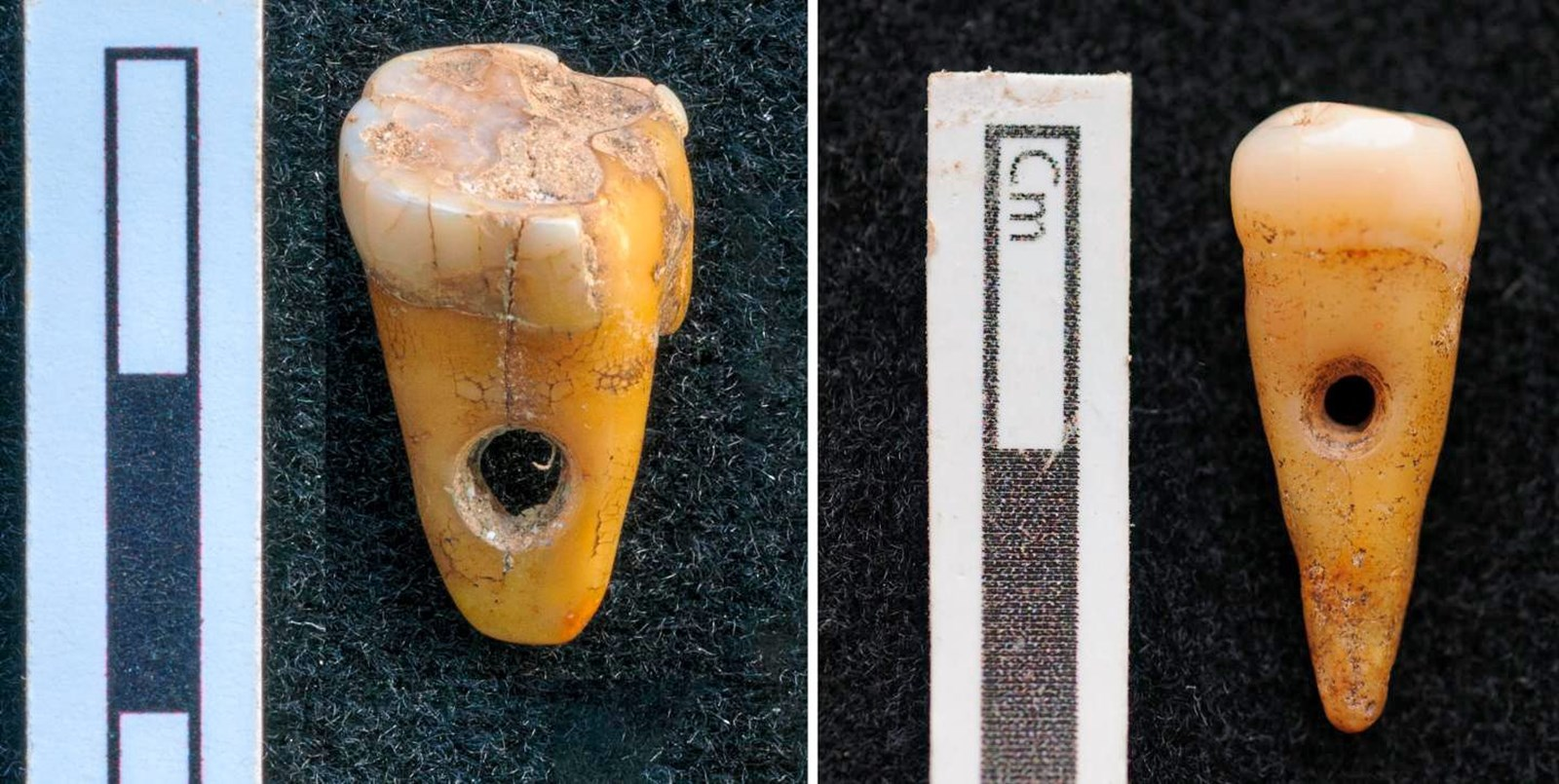 Steinzeitlicher Schmuck aus Menschenzähnen gibt Rätsel auf