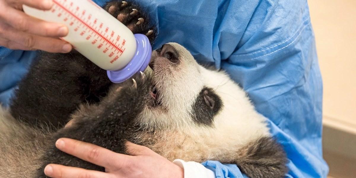 Mehr Zoobesucher sorgen für mehr Naturschutz