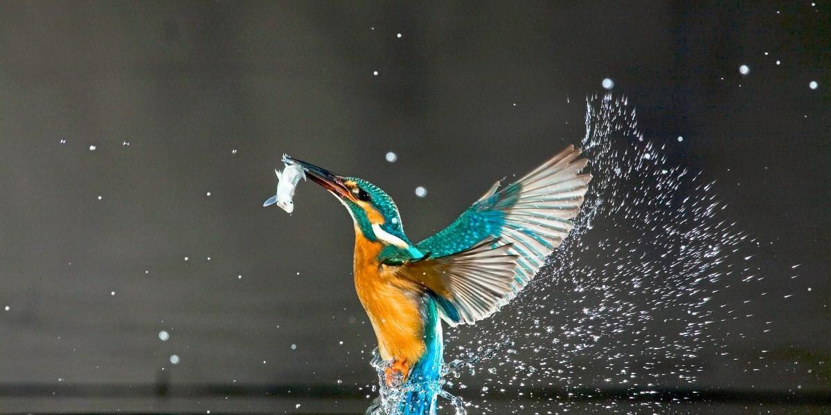 Ein Viertel aller Süßwasserarten ist vom Aussterben bedroht