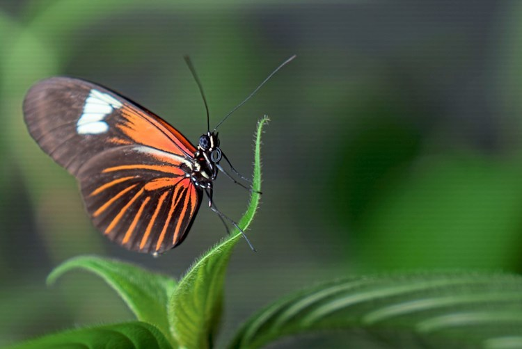 Schmetterlinge ändern ihre Ernährung