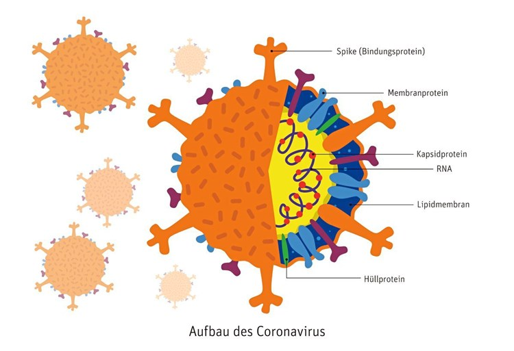 Corona Virus Deutsch