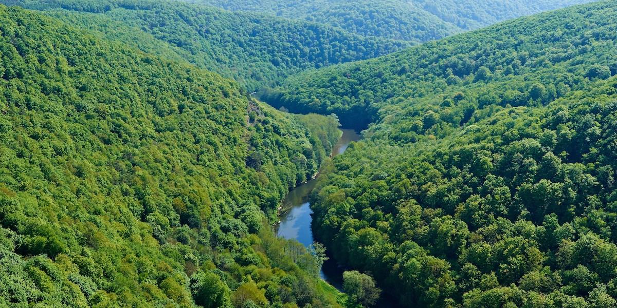 Eine grüne Wildnis als Versuchslabor für den Klimawandel