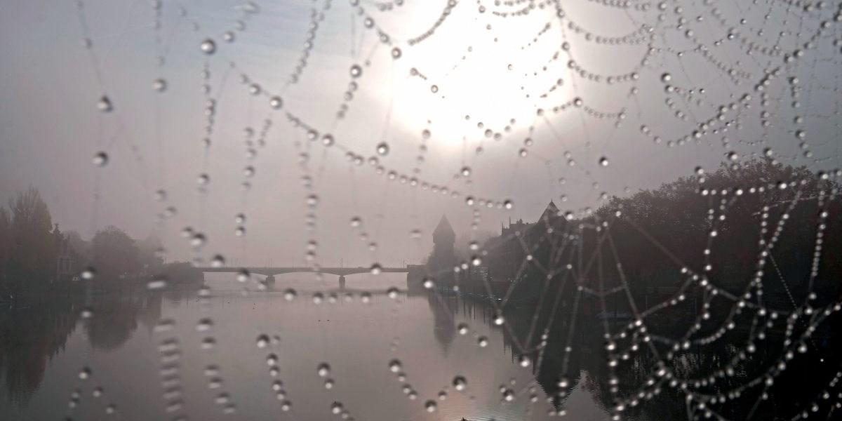 Weben Nach Dem Vorbild Der Spinne Forschung Spezial Derstandard At Wissenschaft